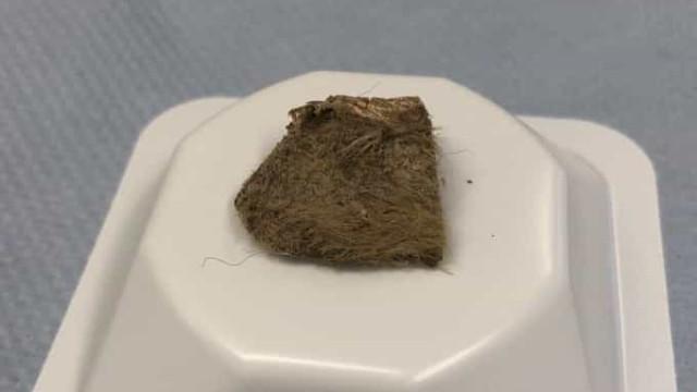 Cientistas identificam última refeição de cão morto há 14 mil anos