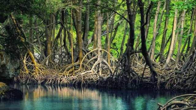 Governo quer derrubar regras que protegem áreas de manguezais e restingas