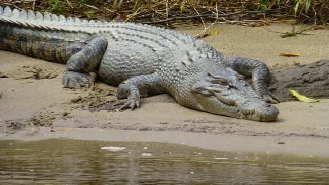 Mulher morre atacada por crocodilo no centro de Moçambique