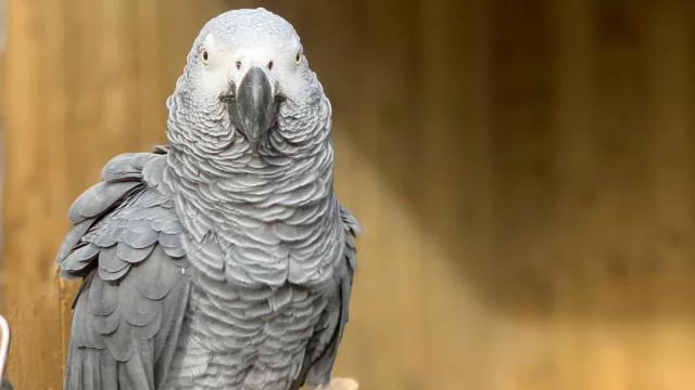 Zoo 'expulsa' cinco papagaios por insultarem visitantes