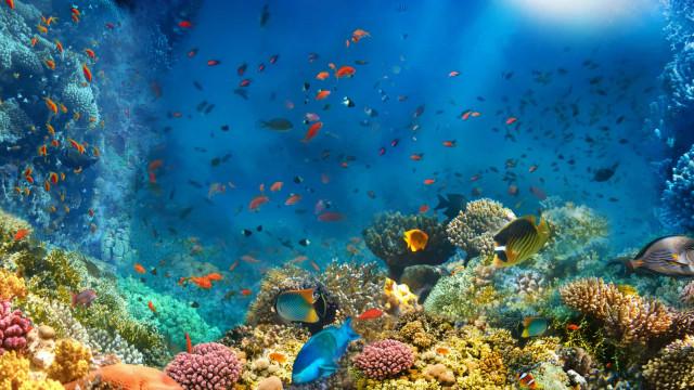 Estudo prevê mudança em recifes de corais por aquecimento do oceano