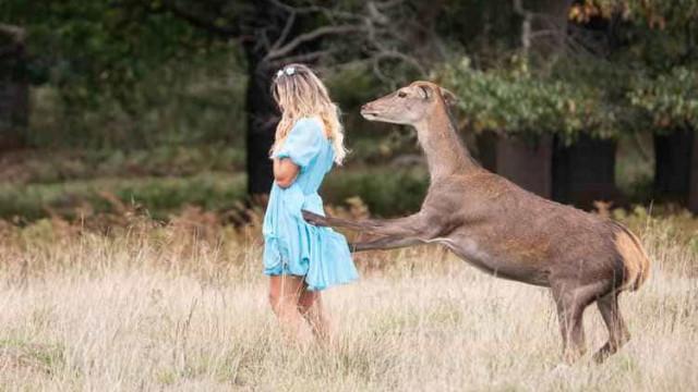 Veado ataca cantora que estava fazendo sessão fotográfica em parque