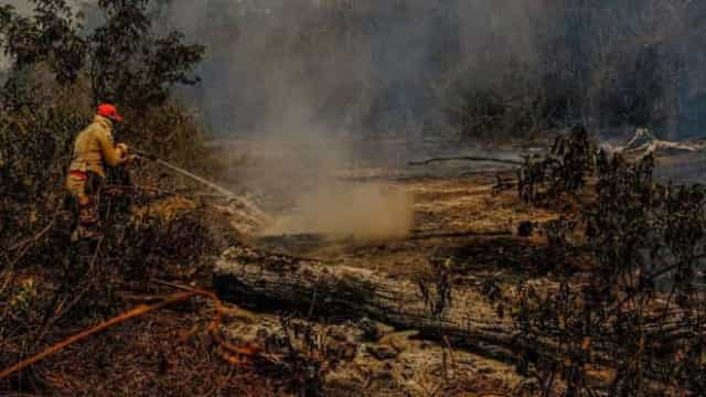 Promessa de verba faz Ibama retomar ações anti-incêndio