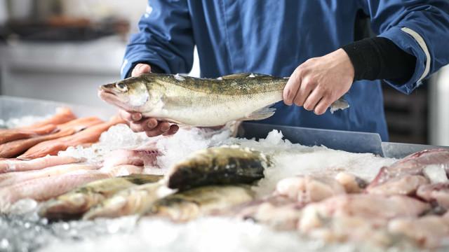 Como saber se o peixe é mesmo fresco? Cinco aspectos para considerar