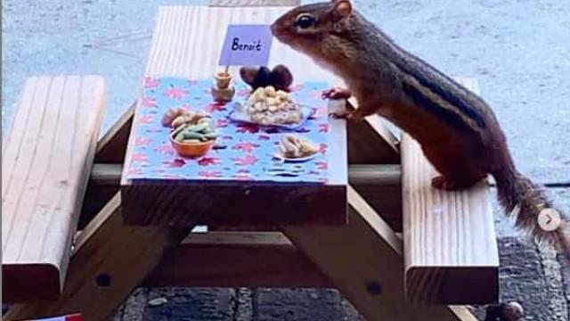 Mulher abre restaurante durante pandemia para dar de comer a... esquilo