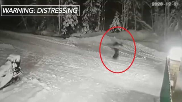 Cão da raça Jack Russell morre ao salvar menino de ataque de lobo