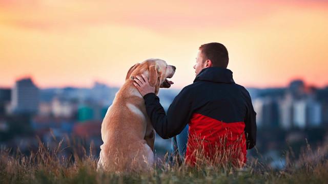 Como o cão virou o melhor amigo do homem. Você faz ideia?