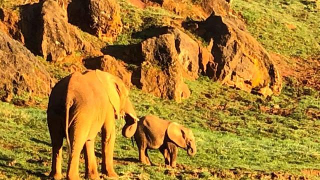 Tratador morre após elefante o atingir com a tromba em parque da Espanha