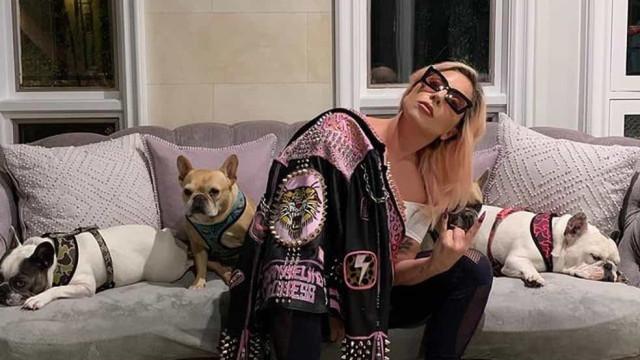 Lady Gaga tem dois cachorros roubados após passeio com 'dog walker'