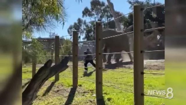 Elefante persegue pai que entrou em jaula com menina de dois anos