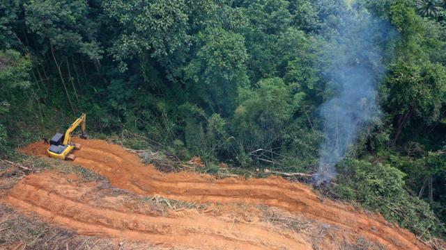 Brasil tem 2º pior ano de desmate da Amazônia da história recente, aponta Inpe