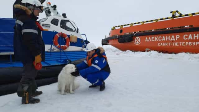 Marinheiros russos resgatam cão perdido no gelo do Ártico