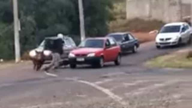 Porco ataca e morde motoqueiro em Franca (SP)