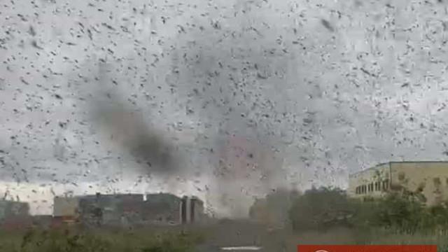 Céu na Rússia  é 'invadido' por tornado de mosquitos; veja