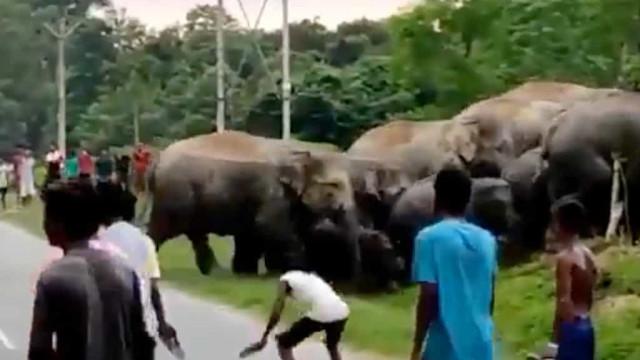 Homem morre pisoteado na Índia por elefante que se sentiu provocado
