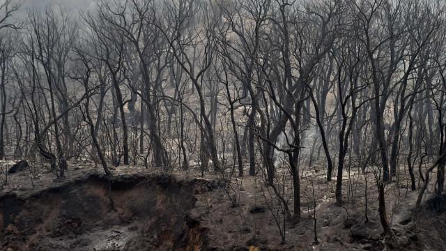 Bombeiros ainda combatem incêndio no Parque do Juquery, na Grande SP
