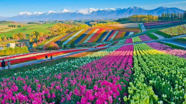 Primavera à vista: os destinos para os amantes de flores!