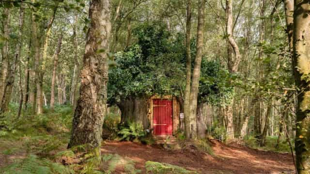 Casa de 'Winnie the Pooh' disponível para alugar no Airbnb