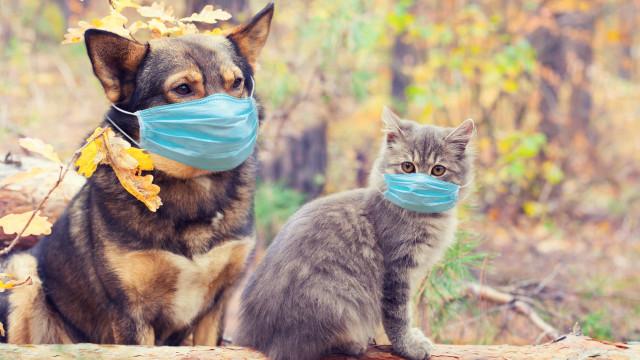 Cães e gatos podem ter vírus da Covid, mas será que podem transmiti-lo?