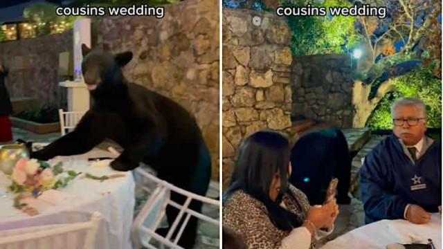 Urso invade copo festa de casamento no México e prova um pouco de tudo
