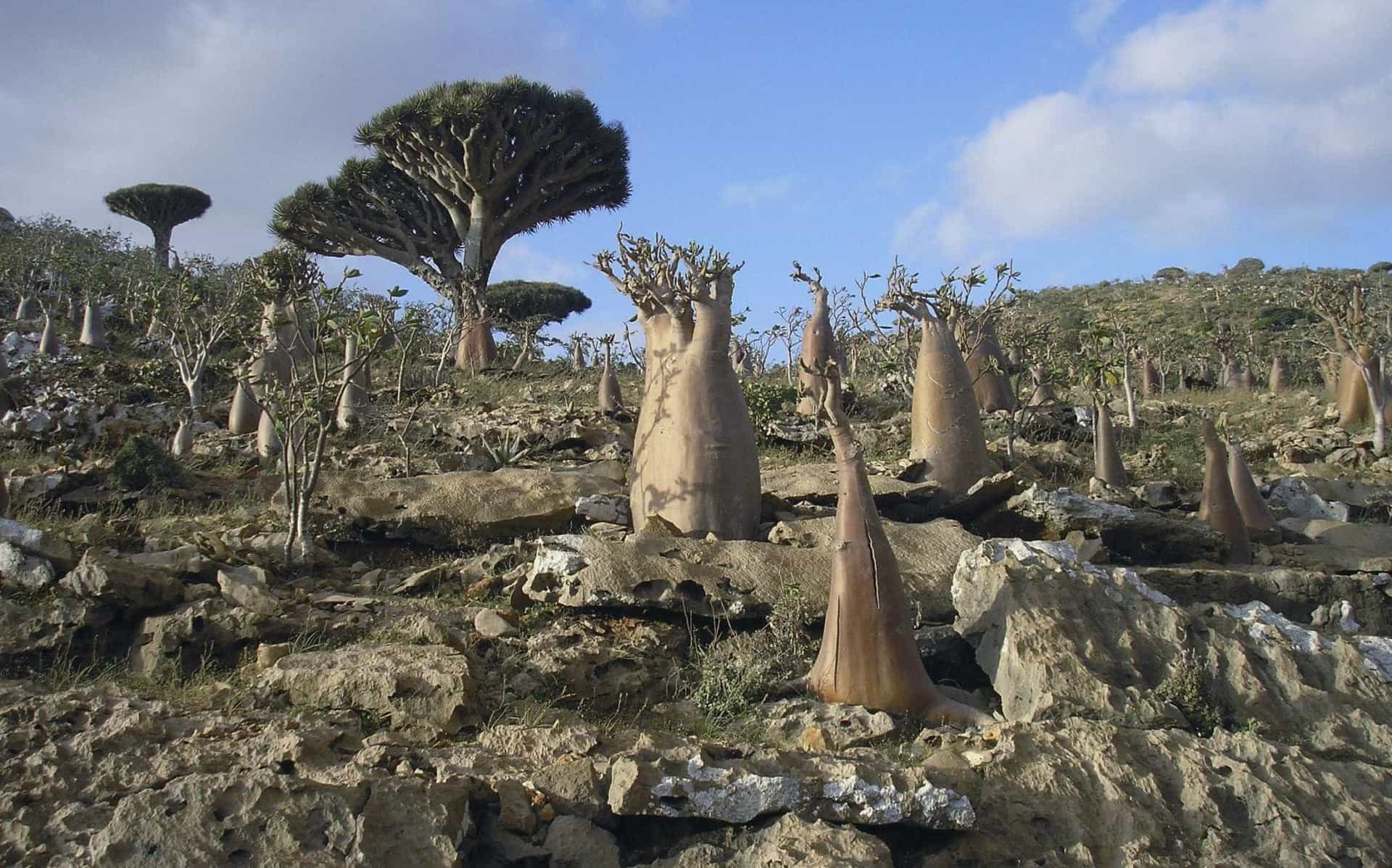 Ilha de Socotra: o destino mais alienígena do planeta Terra