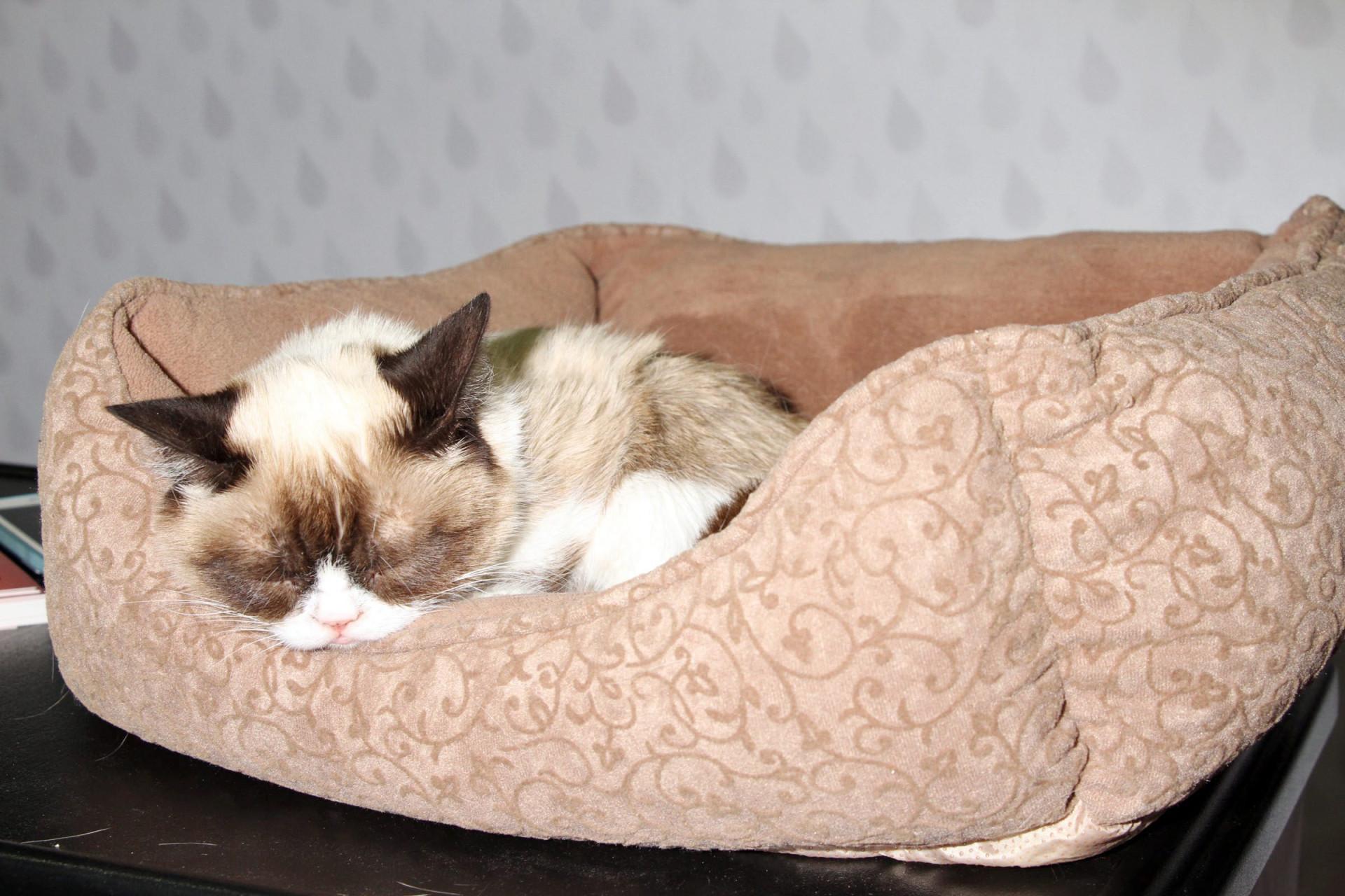 R.I.P. Grumpy Cat: relembre a gata rabugenta mais viral da internet!