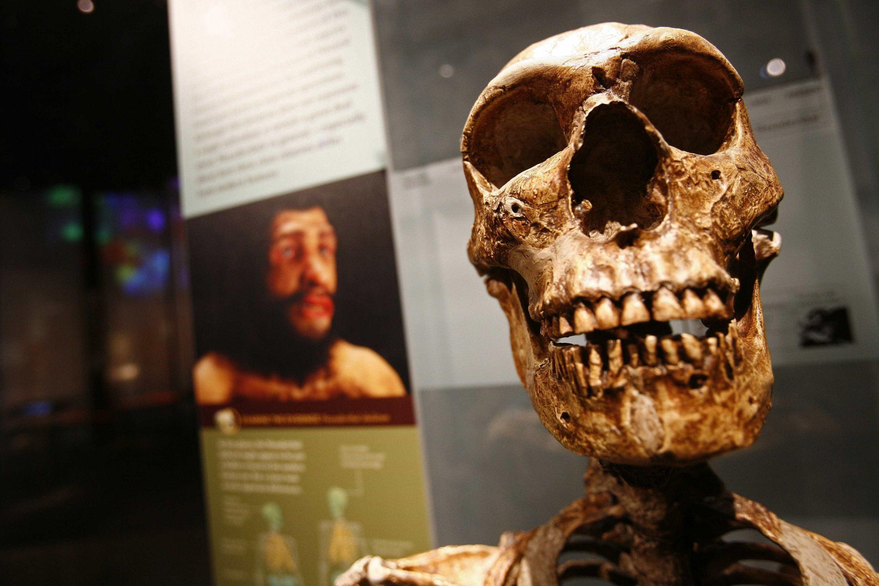 Crianças neandertais do sul da França foram expostas a chumbo tóxico