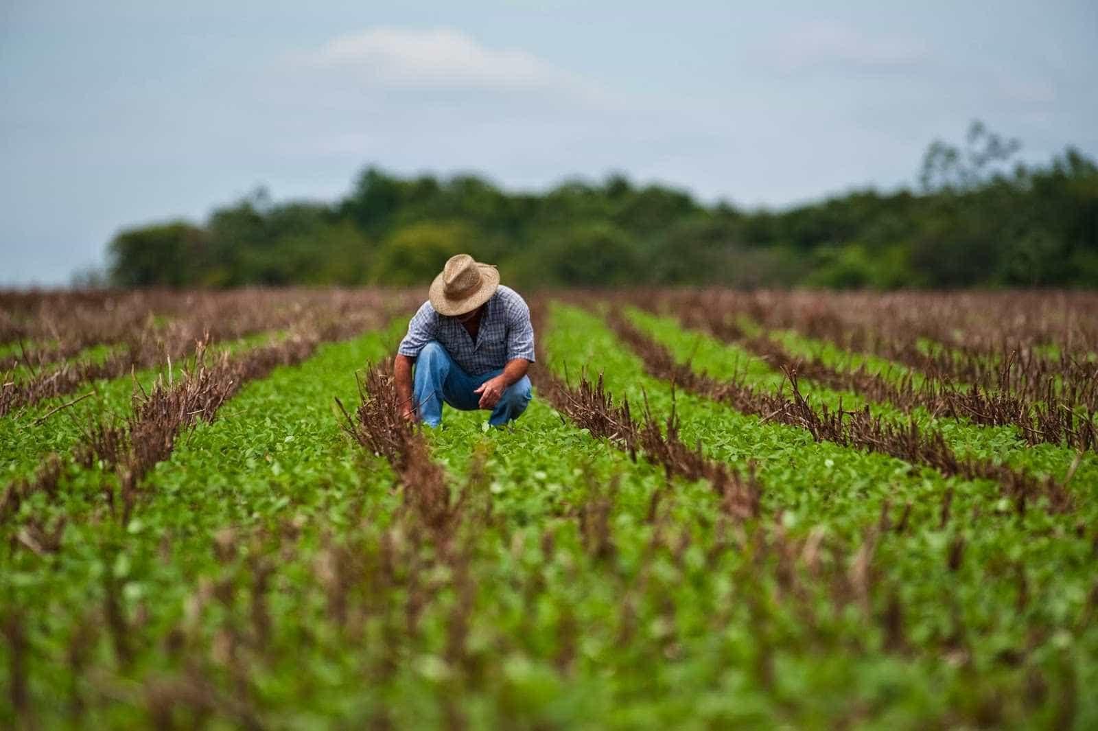 Fim de subsídio ao crédito agrícola desperta crítica entre aliados