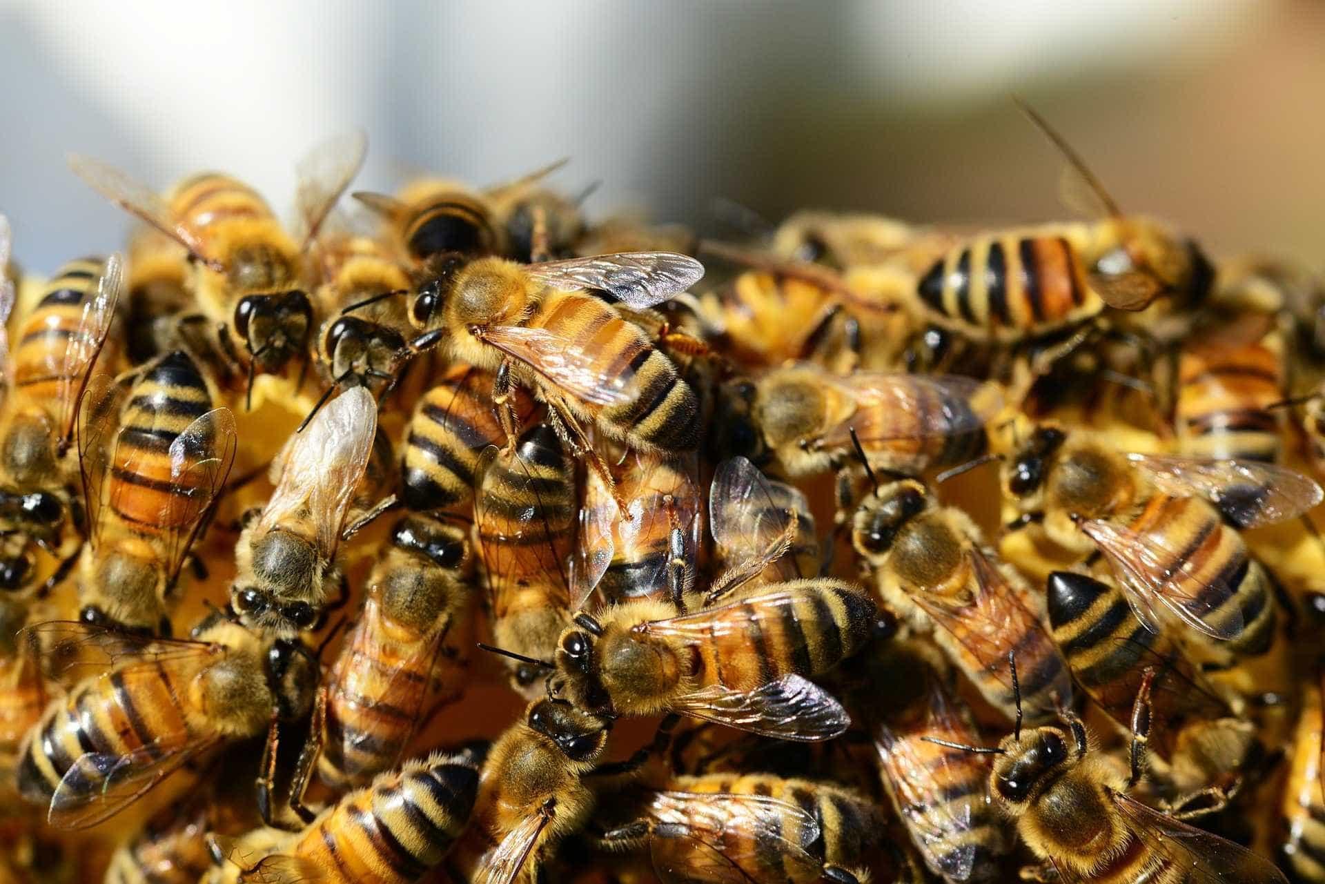 Ataque de abelhas durante missa leva 54 pessoas a hospitais em MG