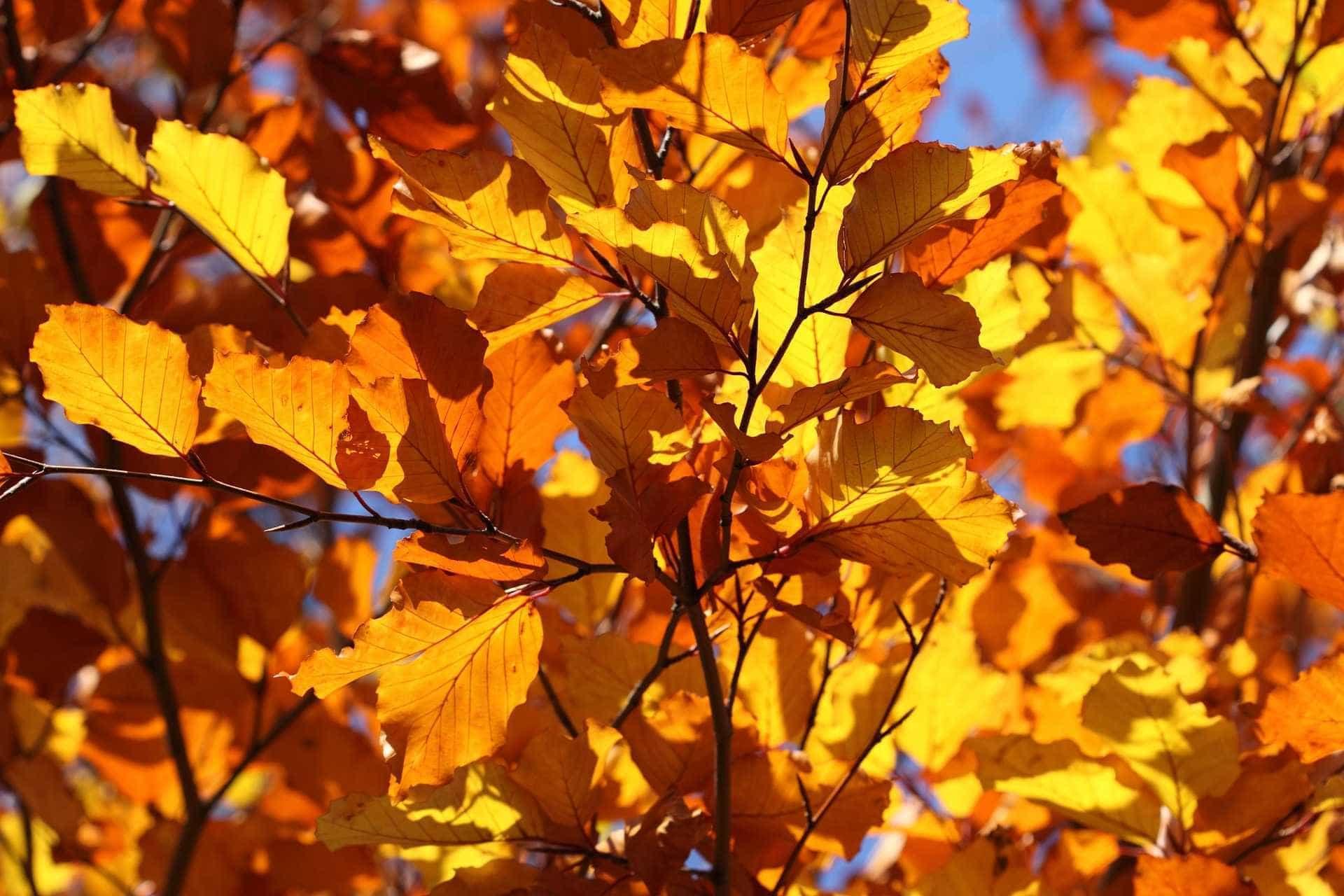 Outono começa nesta quarta-feira, com fraca influência do El Niño