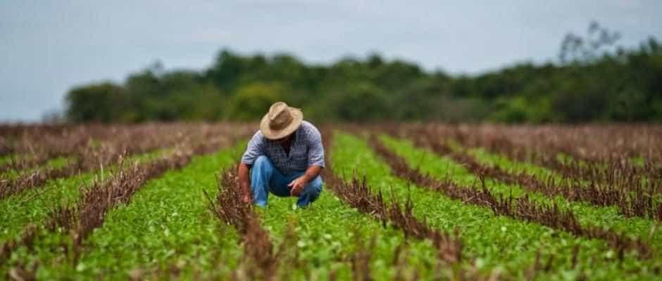 IEA avalia o Plano Agrícola e Pecuário 2018/19