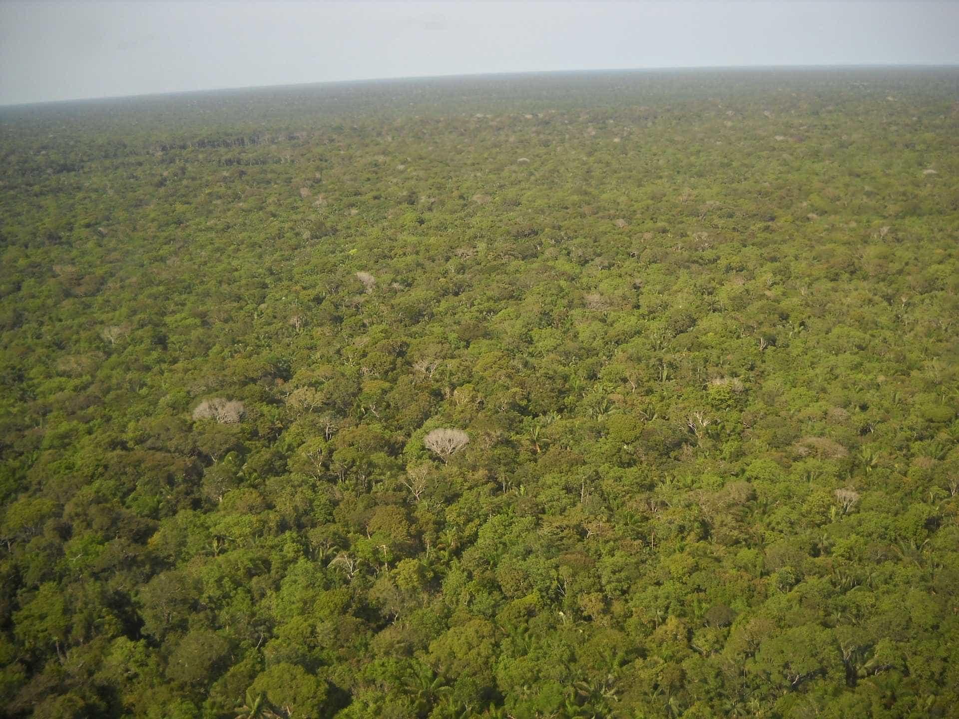 Brasil corre risco de não cumprir meta contra aquecimento global