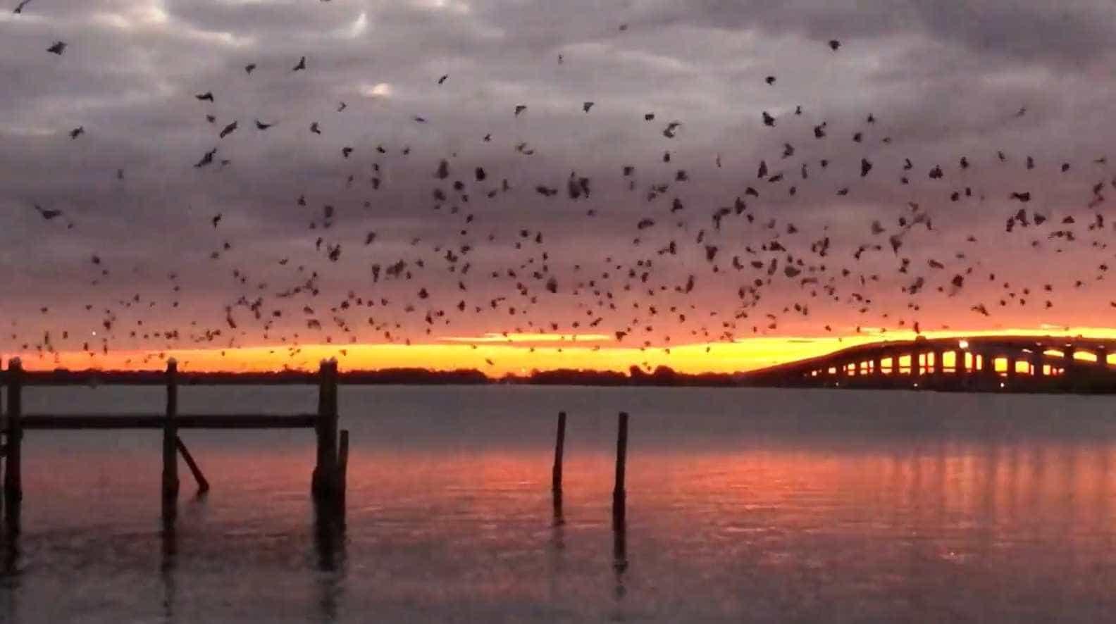 Pássaros preenchem o cenário de um pôr do sol impressionante na Flórida