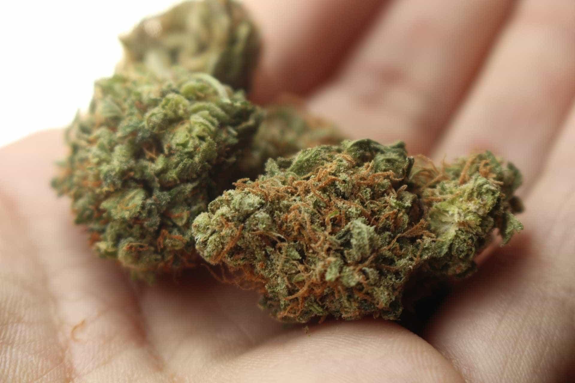 SP: 82% dizem que cresceu número de crianças e jovens usando drogas