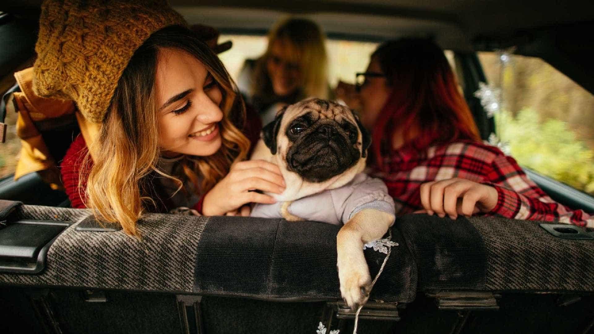 Animais de estimação vão influenciar carros do futuro