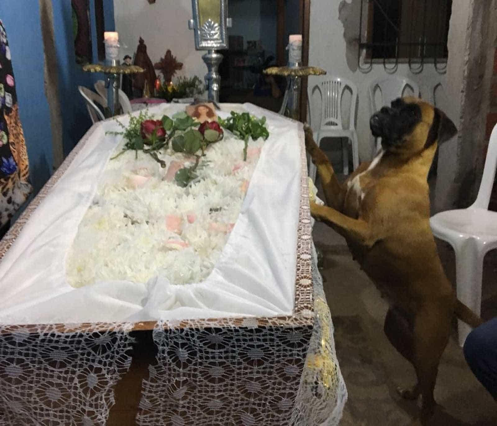 Cachorro impressiona familiares ao velar corpo da dona