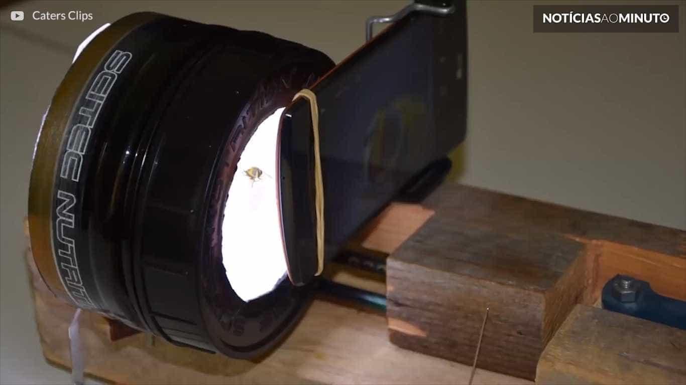 Jovem fotografa insetos com pequeno estúdio artesanal
