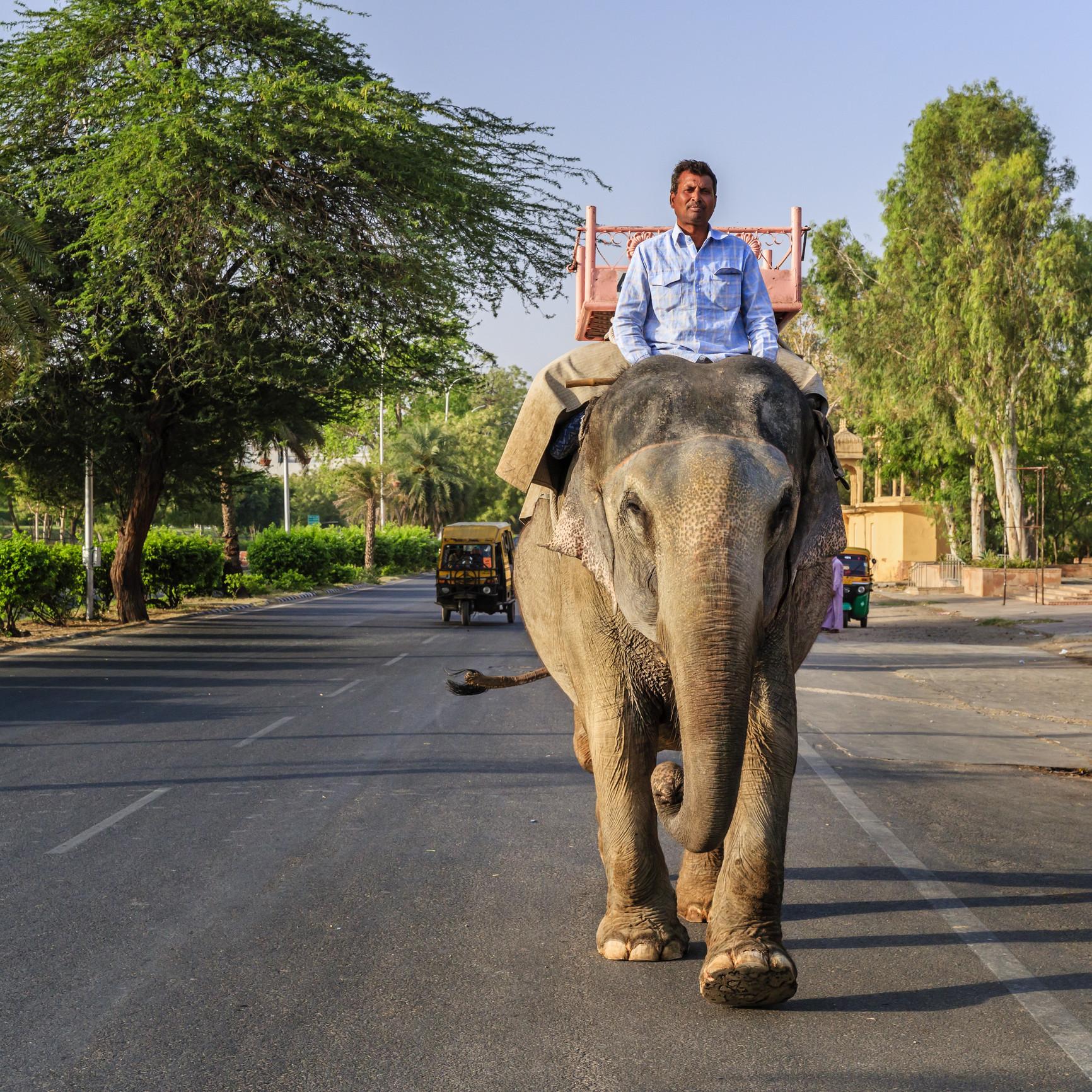 Viagem com estilo: os meios de transporte mais estranhos do mundo