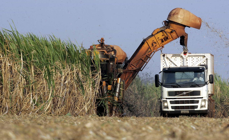 Chuvas prejudicam moagem de cana; produção de etanol volta a crescer