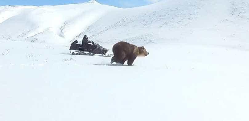 Encontro tenso com um urso enorme na Rússia