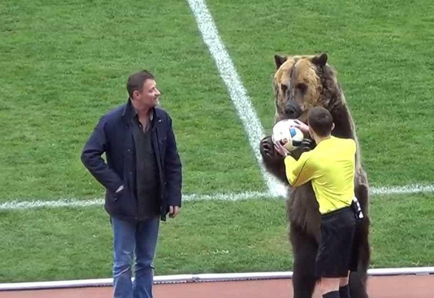 Urso (real) entrega bola para começar partida na Rússia