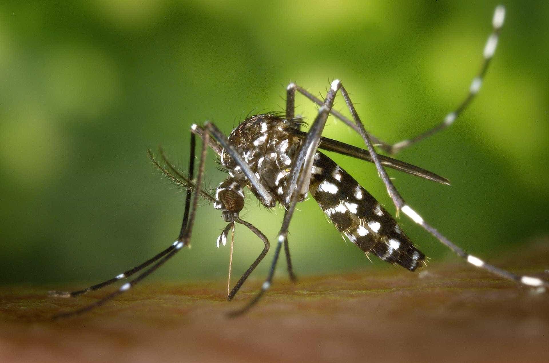 Espírito Santo tem 112 casos confirmados de malária