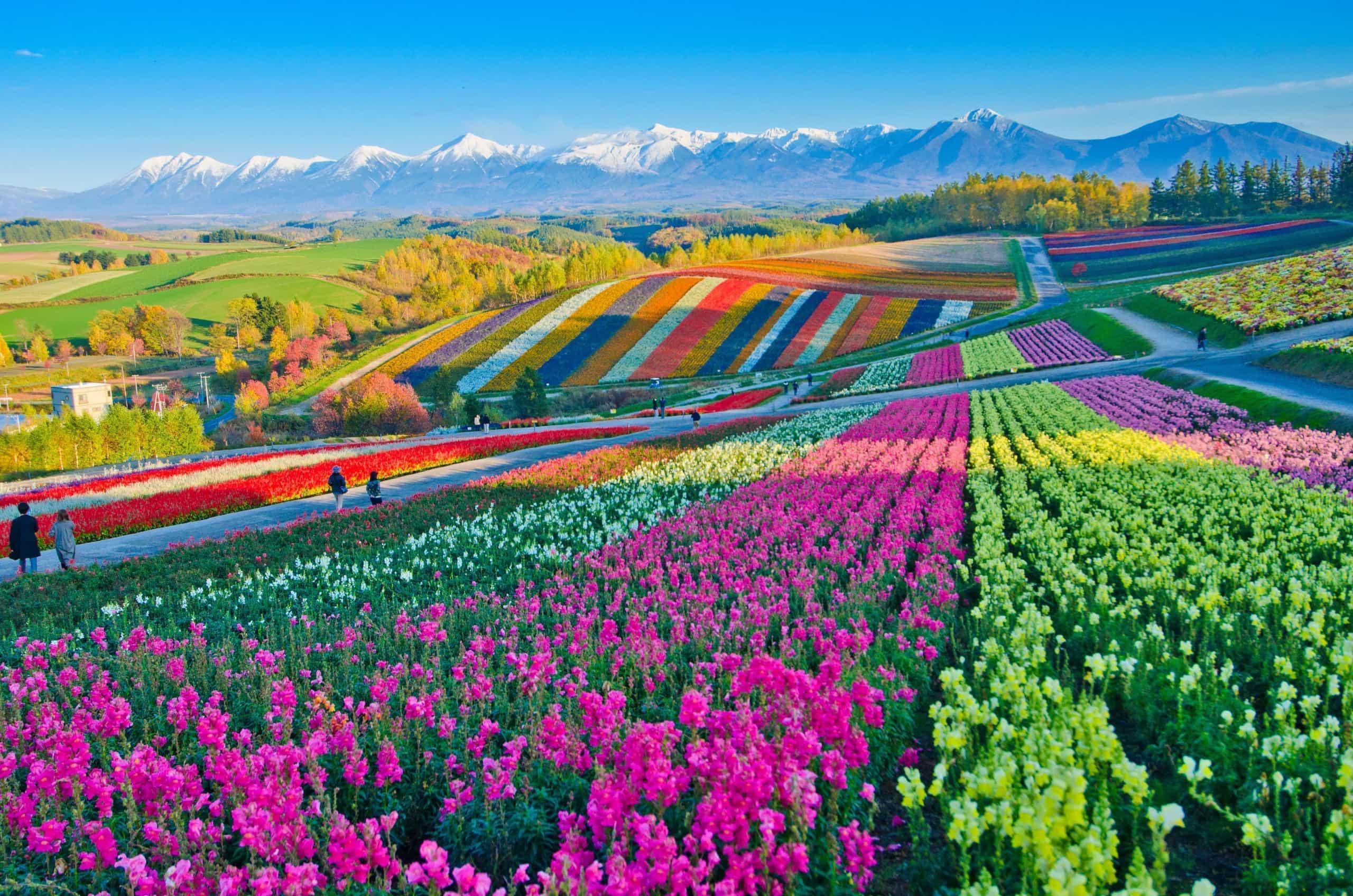 É primavera no exterior: destinos para os amantes de flores!