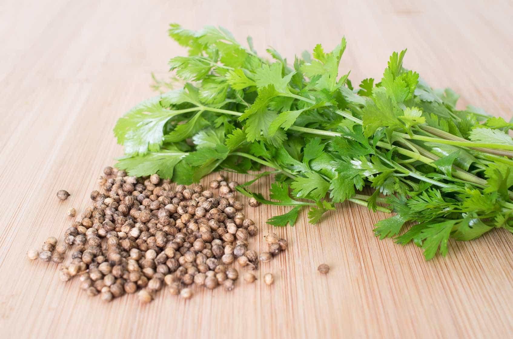 Coentro: 9 benefícios da erva que divide opiniões