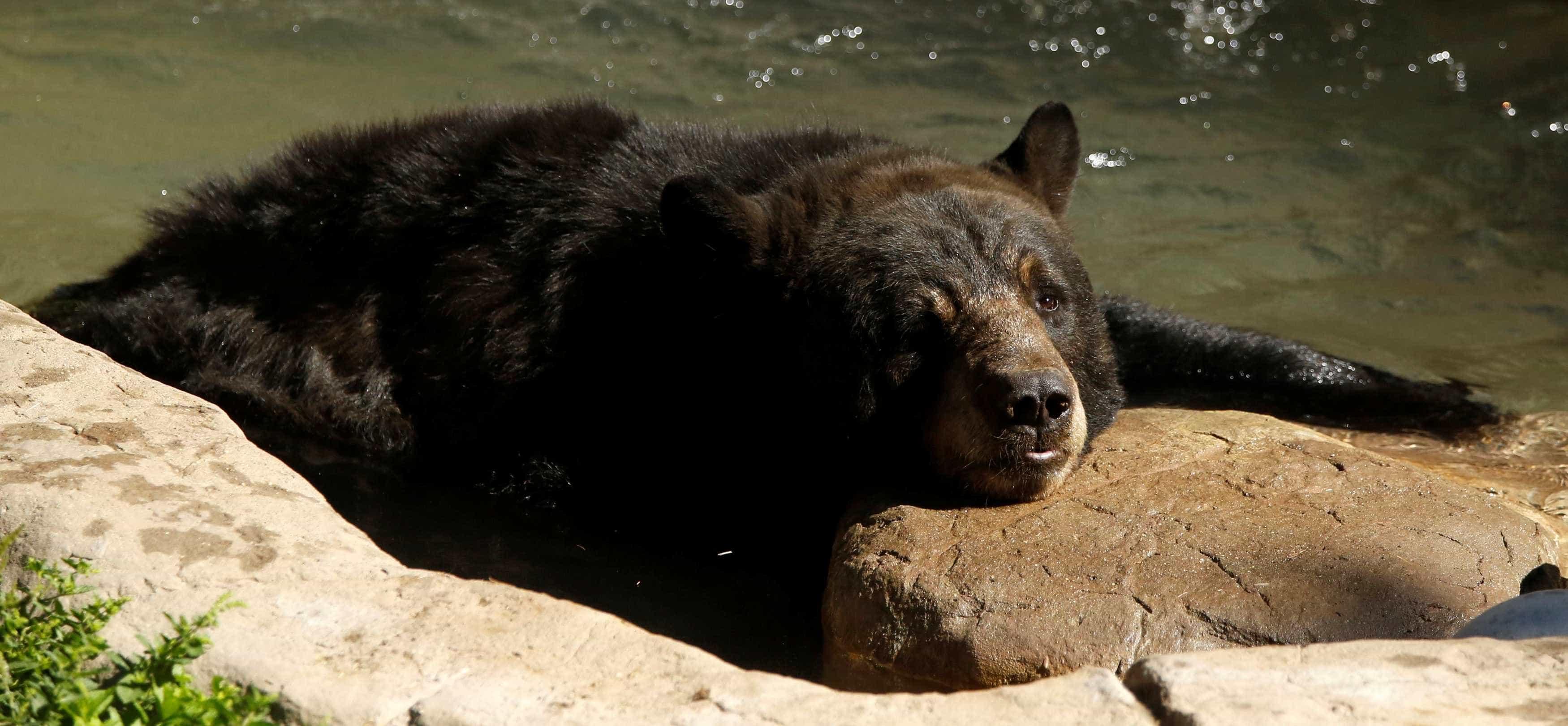 Família cria urso achando que era cachorro