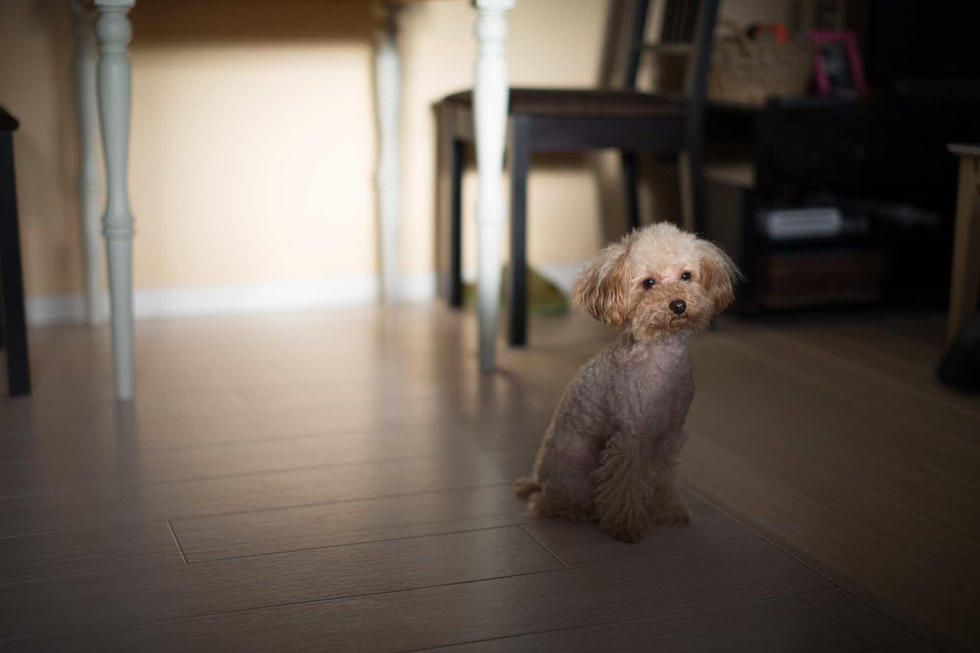 Hospital autoriza idosa a receber visitas da cadela durante internação