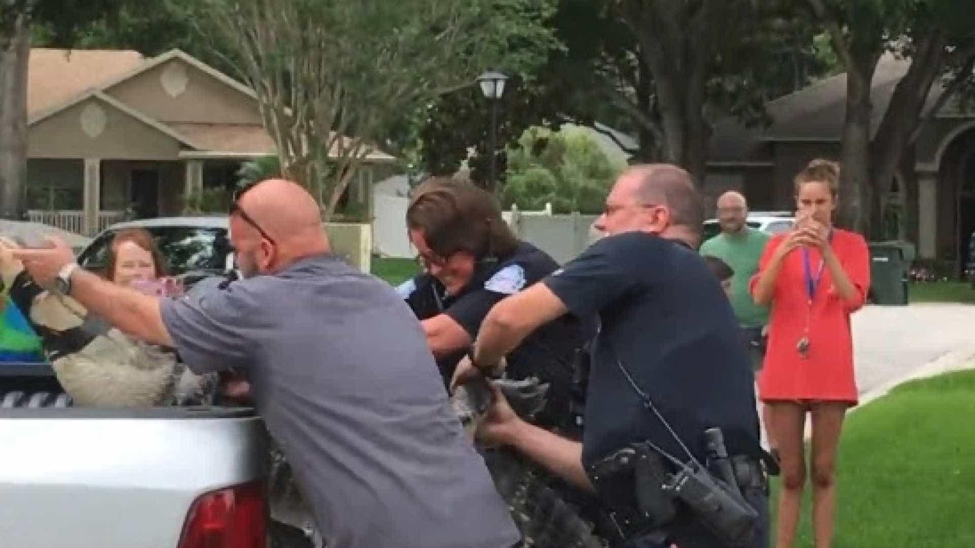 'Cabeçada' de jacaré capturado deixa homem inconsciente