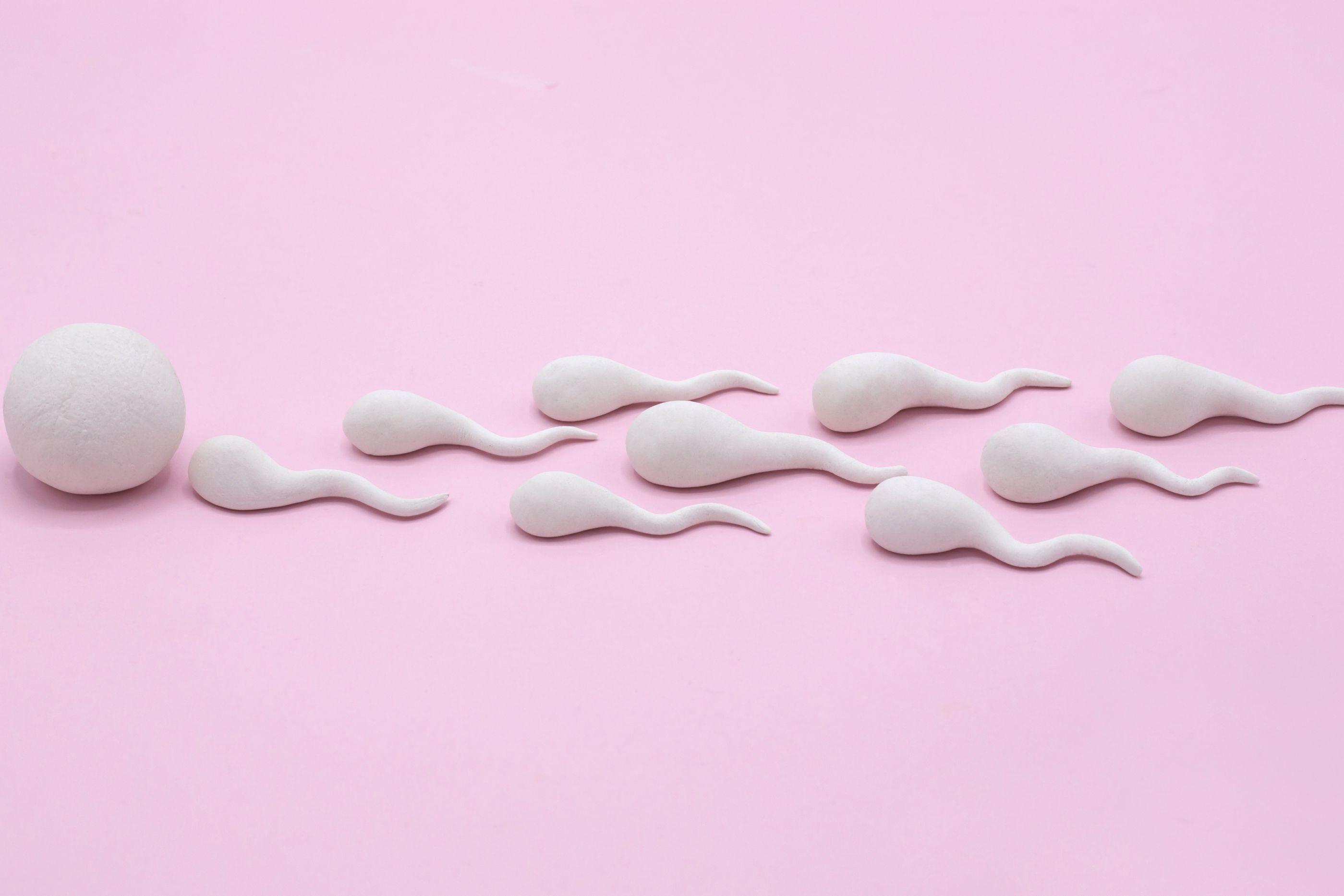 Descoberta parte do espermatozoide responsável pela infertilidade