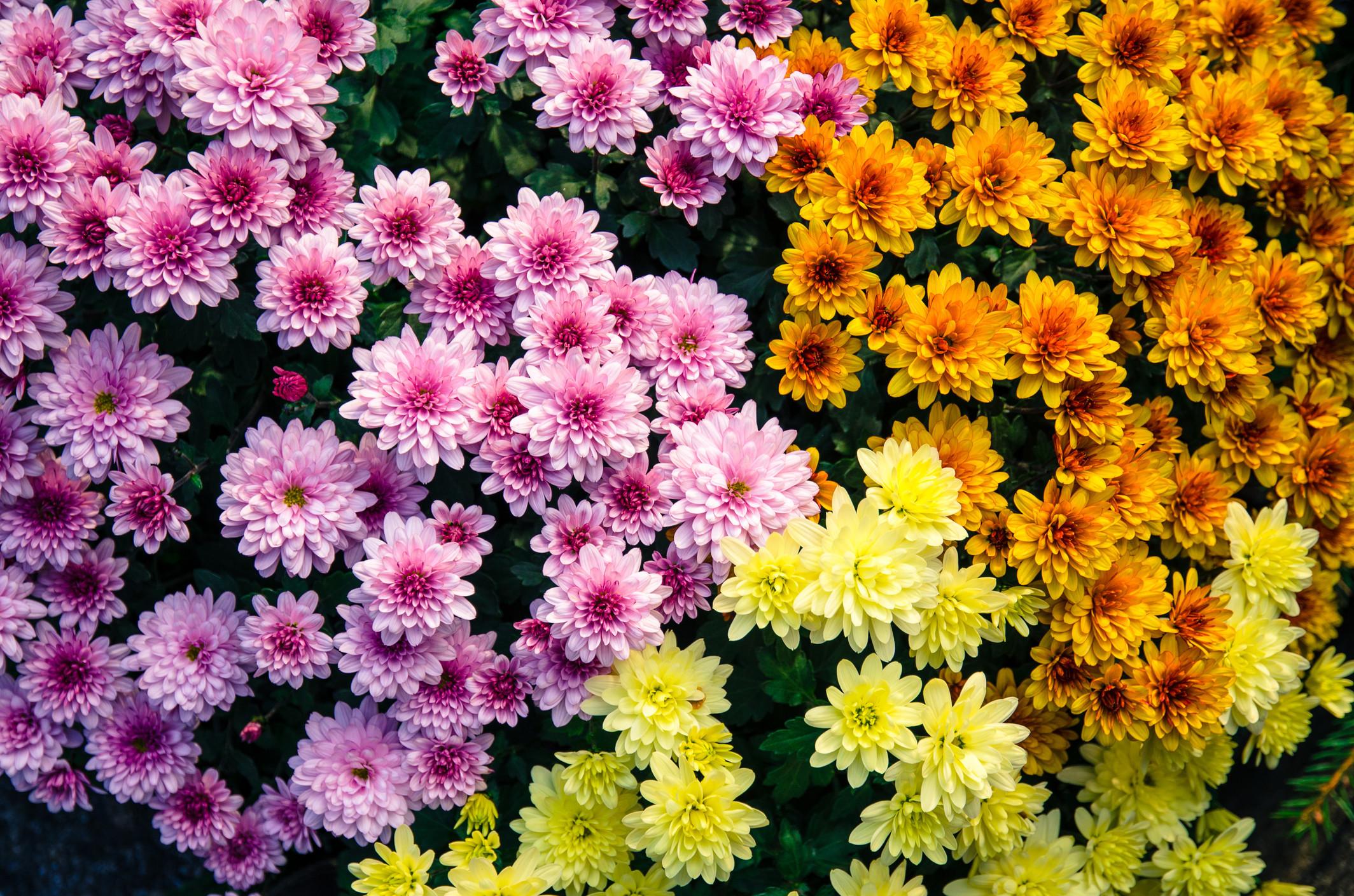Descubra as origens e significados dos nomes das flores