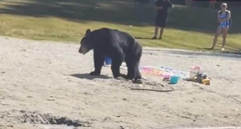 Urso curioso surge em praia no Canadá; vídeo